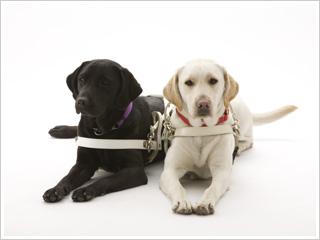 盲導犬育成のための募金